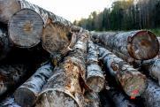 Черных лесорубов будут ловить на местах