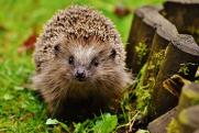 «Еж Рэмбо промахнулся». Метеорологи опровергли предсказания животных о ранней весне в Приангарье