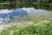 Опасная охрана. Благоустройство грозит уничтожением Свибловских прудов в Москве