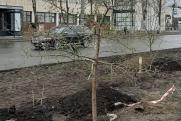 «Состояние уродцев». В чем корень варварского отношения к озеленению Челябинска?