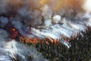 «Арендаторам неинтересно их тушить». Эксперт о ситуации с лесными пожарами