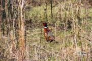Минприроды разработало новые правила охоты, учитывающие интересы коренных народов