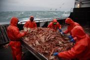 Дайте краба. Сотни дальневосточных рыбаков могут лишиться работы