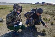 «Роснефть» начала изучение популяции краснокнижной белой чайки в Арктике