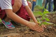 В России восстановили 250 тысяч гектаров лесов
