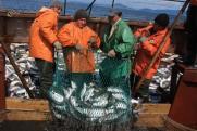Суровый полуостров. Камчатка – рыбный край с непростой историей