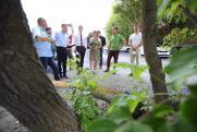 Мэрия Челябинска анонсировала вырубку деревьев на улице Труда