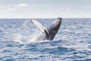 «Роснефть» предотвращает исчезновение занесенных в Красную книгу животных