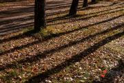 На Среднем Урале с начала сезона от укусов клещей пострадало более 30 тысяч человек