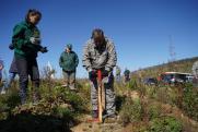 РЖД приступило к лесовосстановительным работам в рамках подписанного с Иркутской областью меморандума