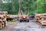 «Ожидается передел рынка». Эколог Владислав Жуков о будущем лесного хозяйства