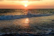 Медвежий прилив. Ученые РАН озвучили выводы о катастрофе в Ачинском заливе у берегов Камчатки