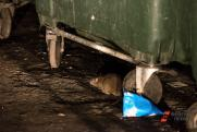 Уральцы в пригороде Екатеринбурга страдают от нашествия крыс