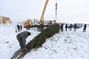 В Академическом районе Екатеринбурга появилась большая сибирская ель
