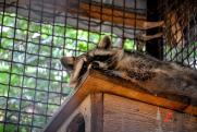 Жители Уфы вместе с чиновниками пытаются создать зоопарк. Душегубка для зверей или туристический центр?