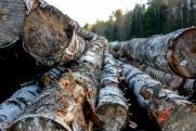 В Красноярском крае провели 900 рейдов среди перевозчиков леса