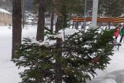 Житель Калтана срубил елку на центральной площади