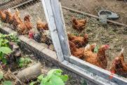 Кузбасскую птицефабрику наказали за куриный помет на сельхозземлях