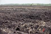 Ученые: Новосибирский оловянный завод сильно загрязняет почву