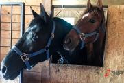 На Ямале построят конный центр