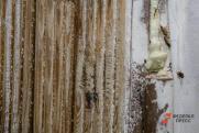 Россиян предупредили о нашествии тараканов