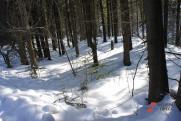 Минприроды Прикамья и «Телец-Агро» десять лет нарушали Лесной кодекс