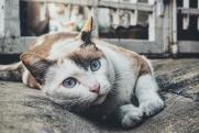 Французские бездомные кошки получили помощь от государства