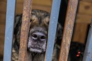 В новосибирском заксобрании поддержали идею убийства бродячих собак