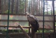 Питомнику на «уральской Рублевке» грозит штраф за краснокнижных птиц