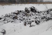 На Среднем Урале разгорелся новый конфликт из-за птичьего помета