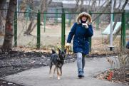 Мэрию Новосибирска обязали найти места для выгула собак