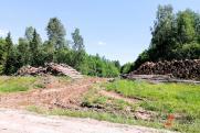 Группа браконьеров предстанет перед судом за многомиллионный ущерб лесу