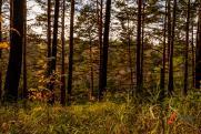 Омичам запретили ходить в лес
