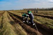 «Зеленая Башкирия»: «Башнефть» высадила в регионе яблони, ели и сосны