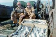 В России вновь вырастут цены на рыбу