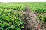 Новосибирские фермеры рискуют остаться без господдержки