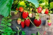 Как облегчить себе работу на огороде: лайфхаки от садовода