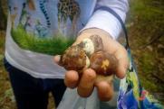 Как будет работать запрет на сбор грибов и березового сока: разъясняют в Минприроды