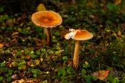 Депутат Госдумы об ужесточении правил сбора грибов: «Регулирование природных ресурсов есть во всех странах»