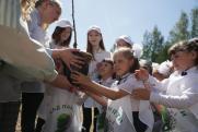 Волонтеры РМК посадили 25 тысяч деревьев в «Саду памяти»