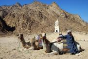 Туристка поделилась ценами на отдых в Египте