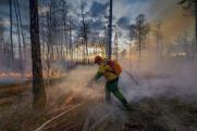 В Тюменской области продолжают тушить 1,5 тысячи гектаров леса