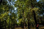 «Конданефть» высадила около 1 млн саженцев сосны