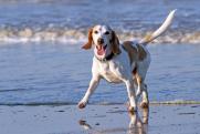 Когда можно брать животных на пляж: одно исключение