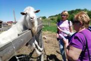 В Челябинской области развивают шоп-туры по сельским территориям