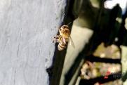 Житель Оренбурга получит от государства более 1,6 млн рублей за гибель пчел