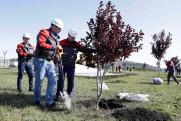 Русская медная компания засадила города и поселки молодыми деревьями и цветами