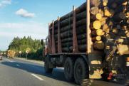 Эксперт о запрете на экспорт леса: «Нужно развивать производство, а не искать лазейки»