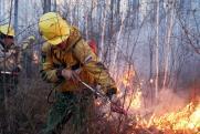 В Приангарье площадь лесных пожаров выросла на 17 %