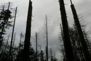 Загадка мертвого леса: чем грозит предприятие «Росатома» Бурятии